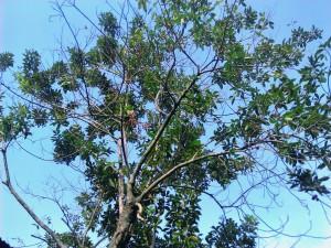 old, tree, blue sky, background