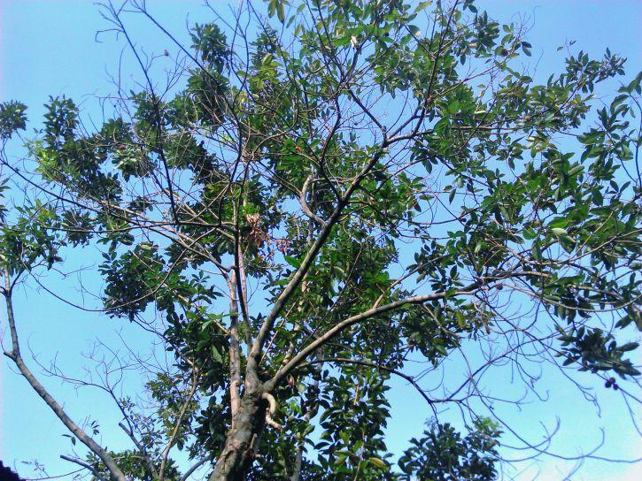 old, tree, blue, sky, background