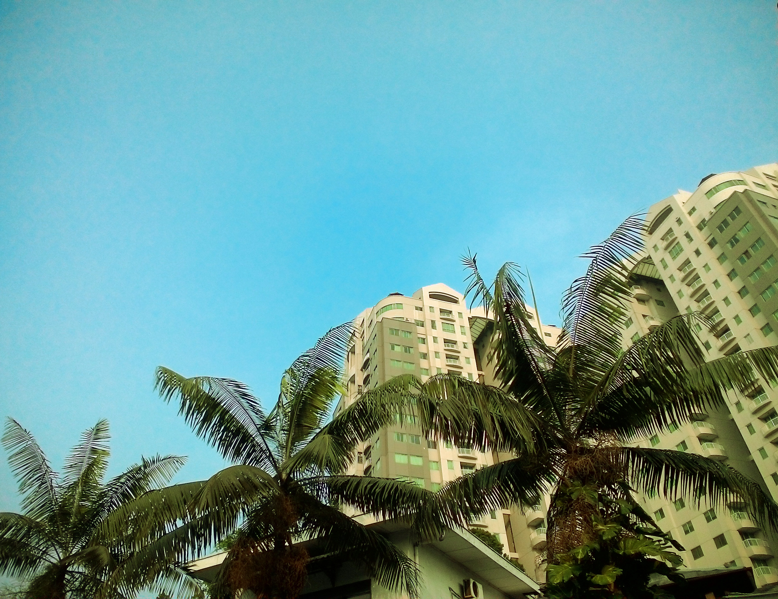 Free photograph; palm, trees, between, tall, buildings, tower