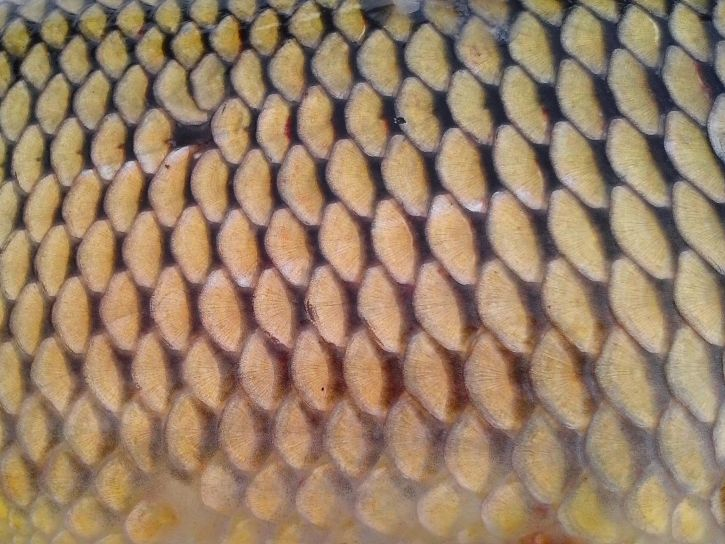 texture, fish, scale