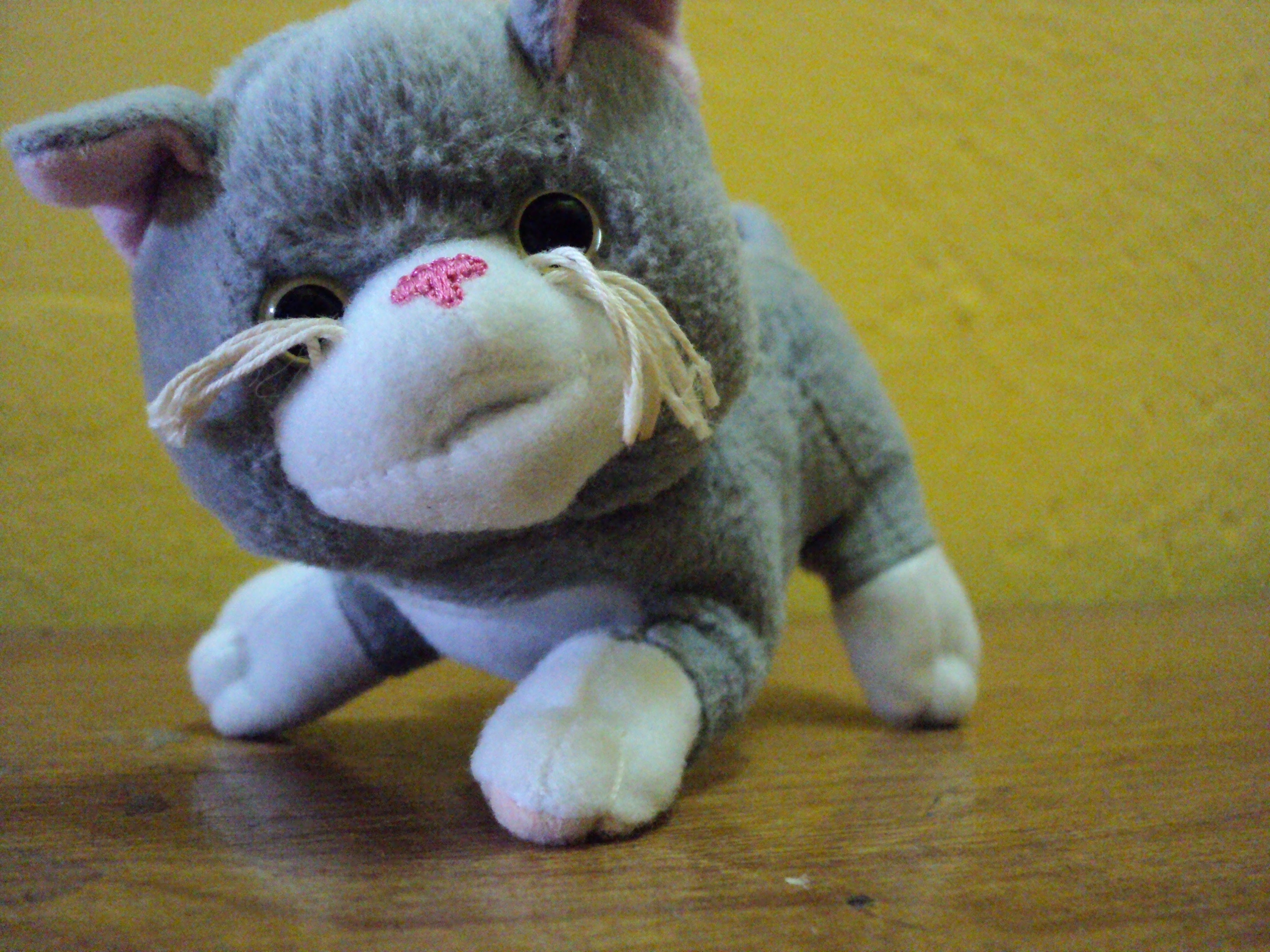 Free photograph; plush, cat, toy, table