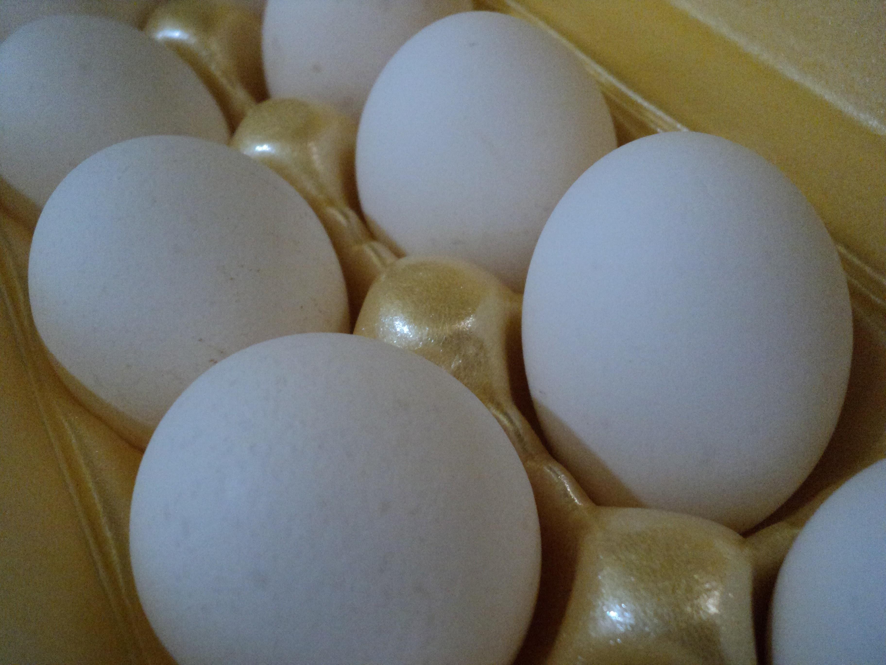 Free photograph; egg, kitchen, close