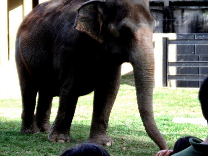 слон, зоопарк