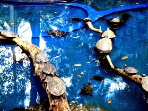 reptile, tortues, animaux, piscine, zoo, parc, ville