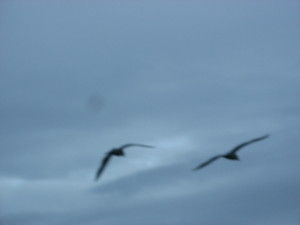 blurry, seagulls, birds, blue sky, artistic