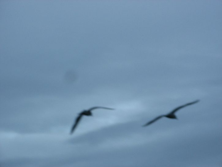 blurry, seagulls, birds, blue, sky, artistic