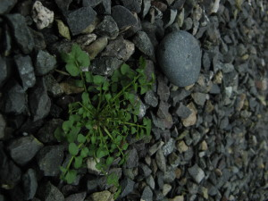 mauvaises herbes, la roche, le gravier, la terre
