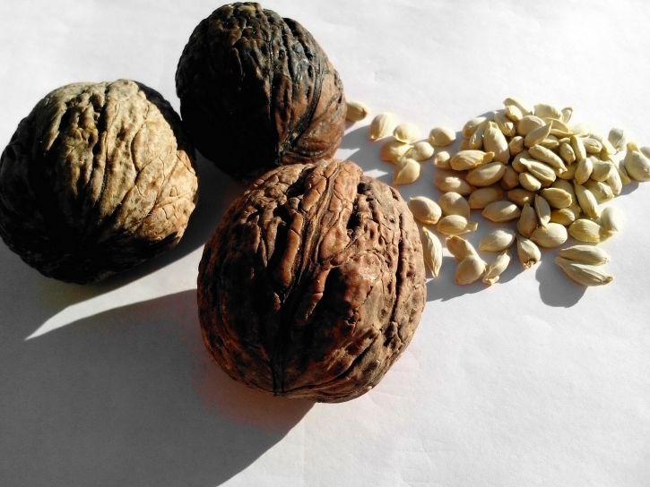 walnut, plants, seeds, citrus, lemon
