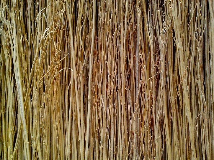 sorghum, broom, texture