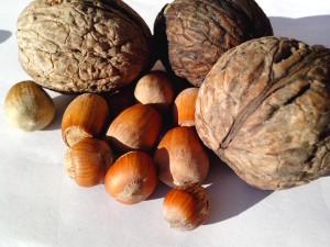 hazelnut, kenari, kacang, biji, buah-buahan, tanaman