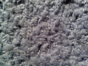 poor, quality, wool, gray, up-close, texture