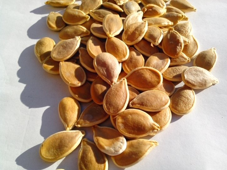 pumpkin, seeds, natural, organic, seed, plant