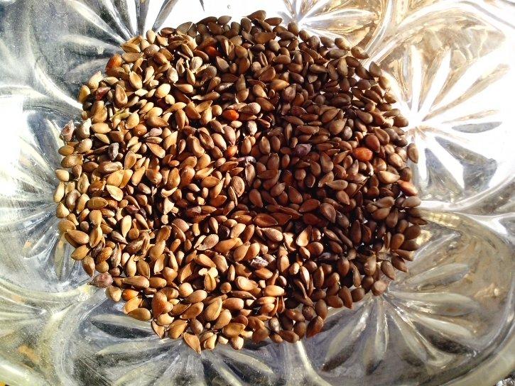 seeds, apple, big, bowl