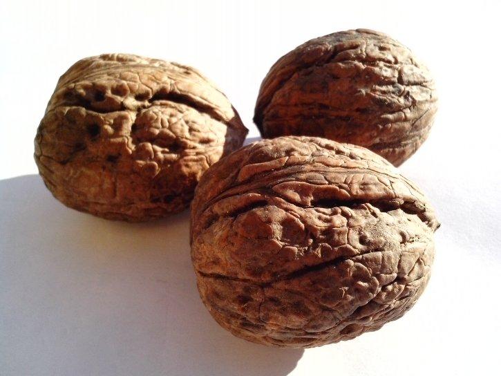 walnut, nut, seeds, plant, fruit, big, white, background