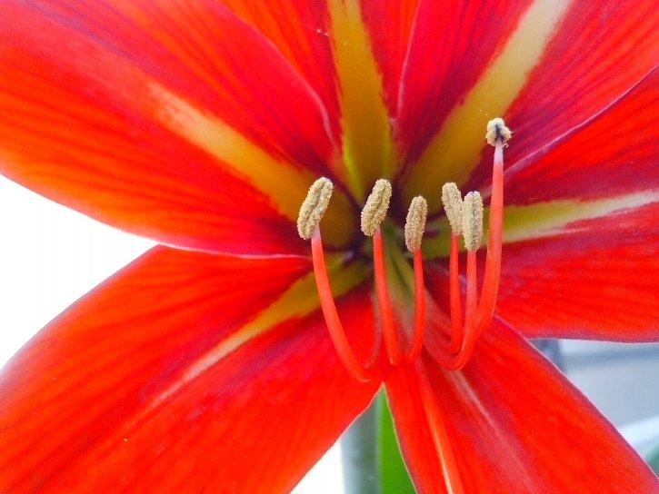 nectar, pestle, pollen, pollination, flower, petals, bloom