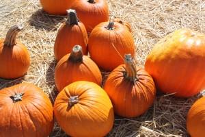 тыквы, осень, сено