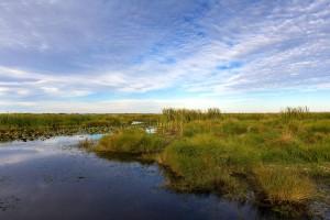 bayou, Sauvage, selvaggia, rifugio, Orleans, Louisiana