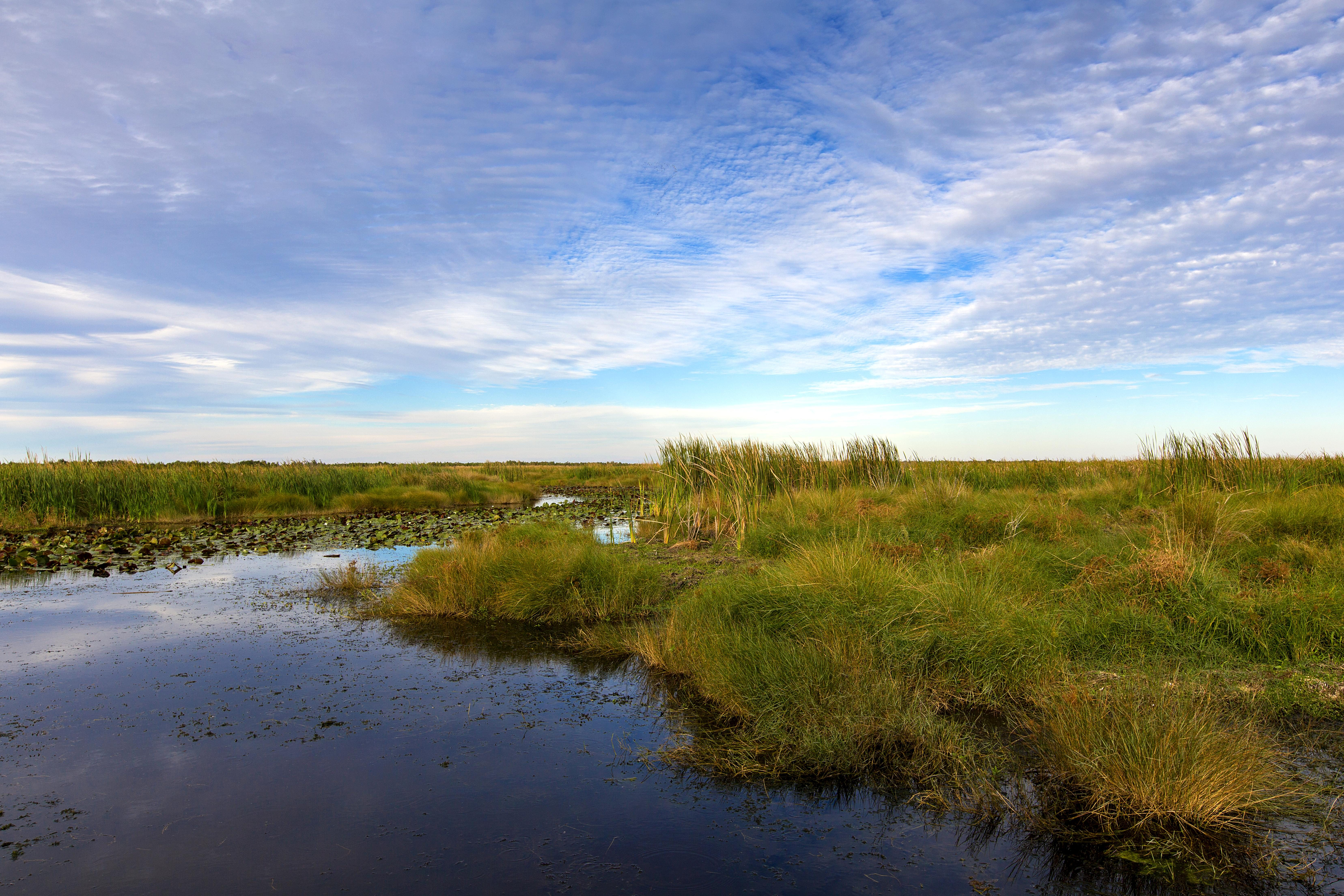 Free photograph; bayou, Sauvage, national, wildlife, refuge, Orleans, Louisiana