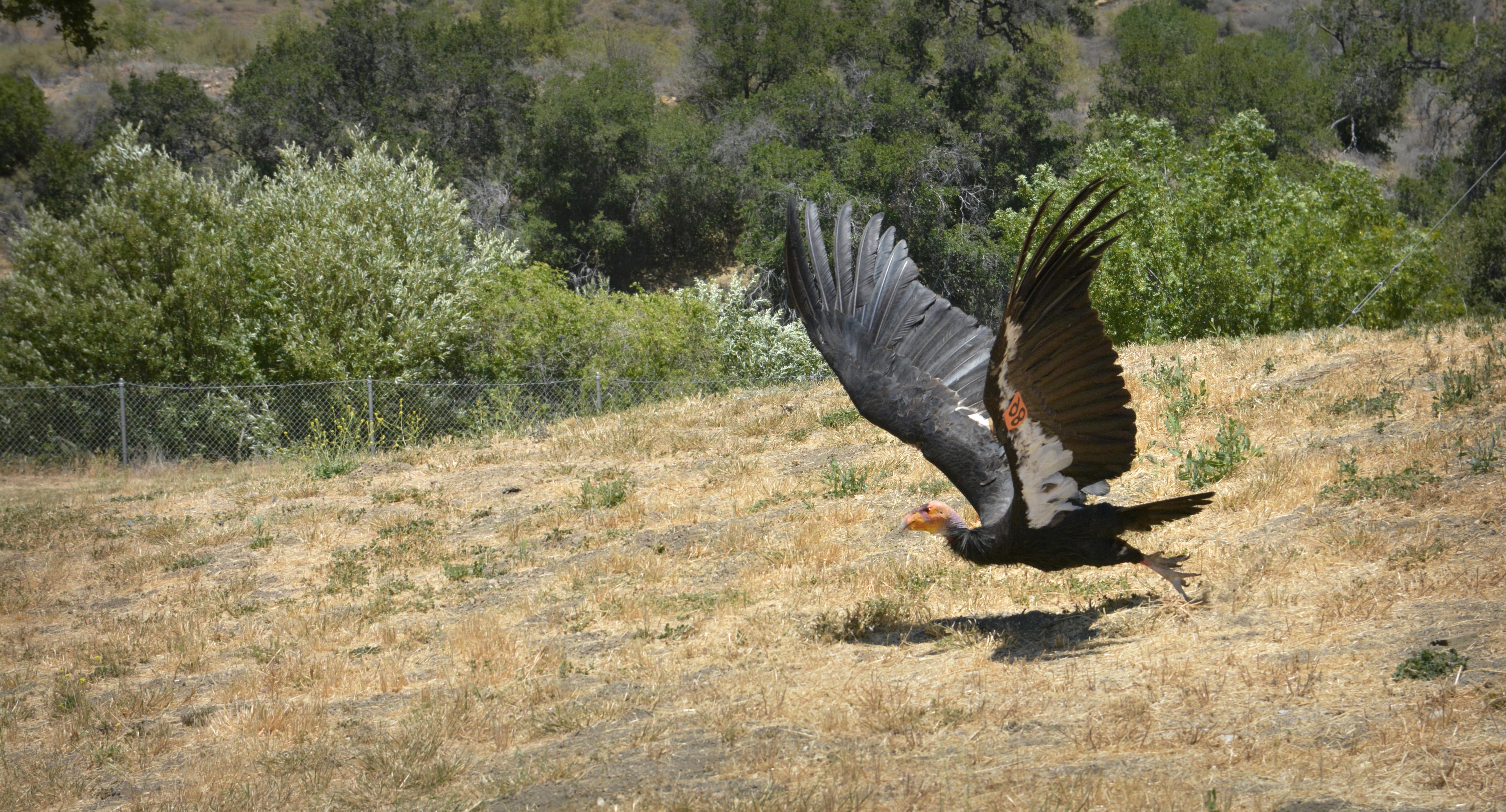 Gay lupiči s velkými ptáky