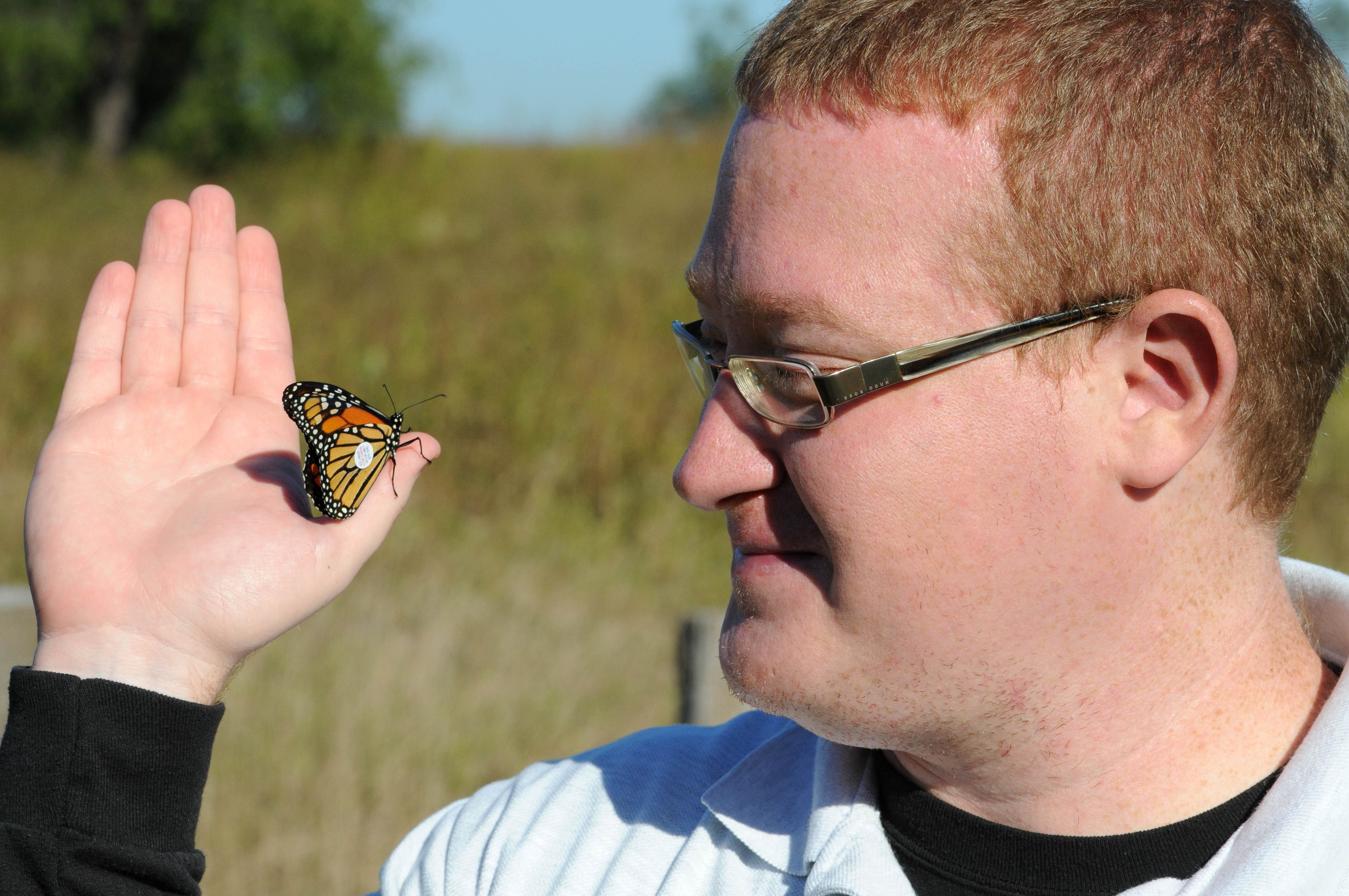 Free photograph; biologist, tags, Monarch, butterfly