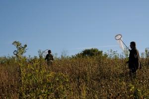 biologists, search, monarch butterflies