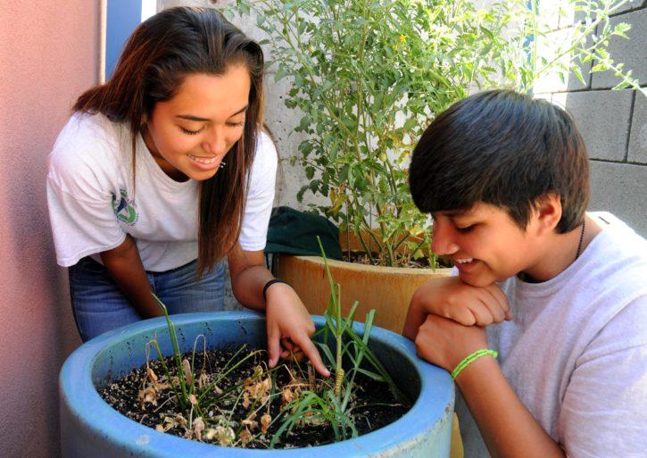 хлопець, подруга, саду, рослини, садівництво
