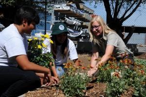 communautaires, le jardinage, le groupe, les gens