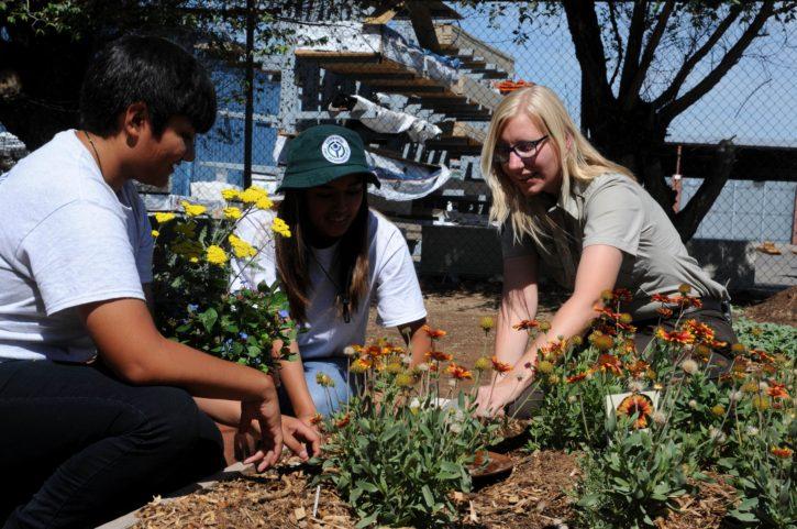 community, gardening, group, people