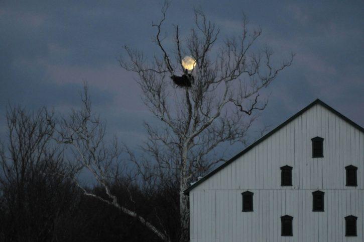 독수리, 둥지, 밤, 헛간, 오래 된 집, 농장