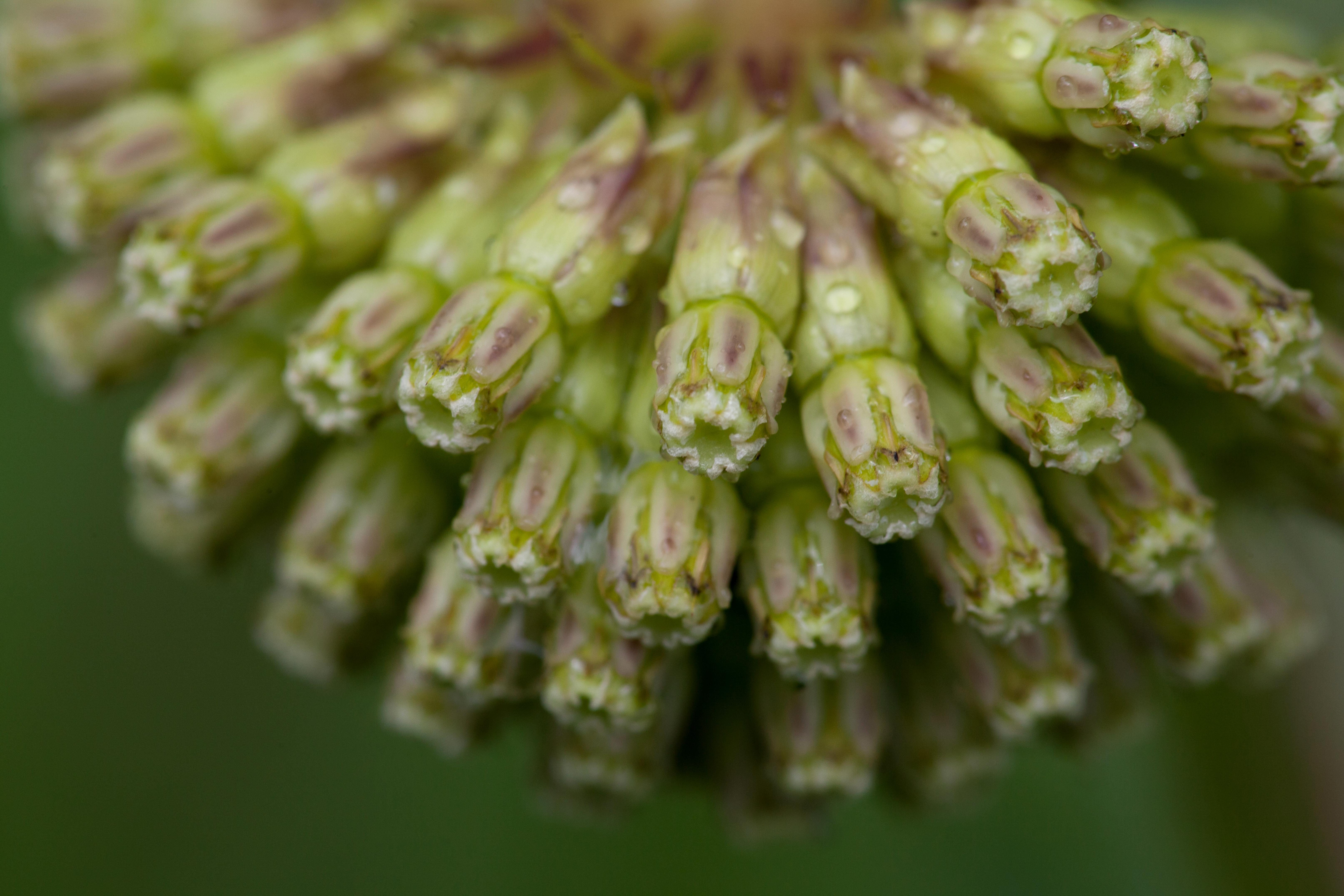 Free photograph; green, macro, plant, petals, grass, close