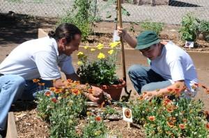 arbete, gemenskap, trädgård
