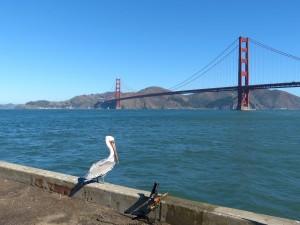 brown, pelican, stocky, sea, birds, bridge, background