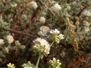 Segundo, bleu, papillon, insecte, fleurs, plantes