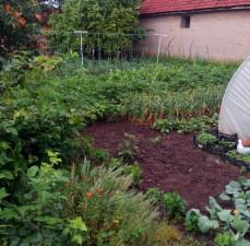 庭、野菜、有機、温室、園芸