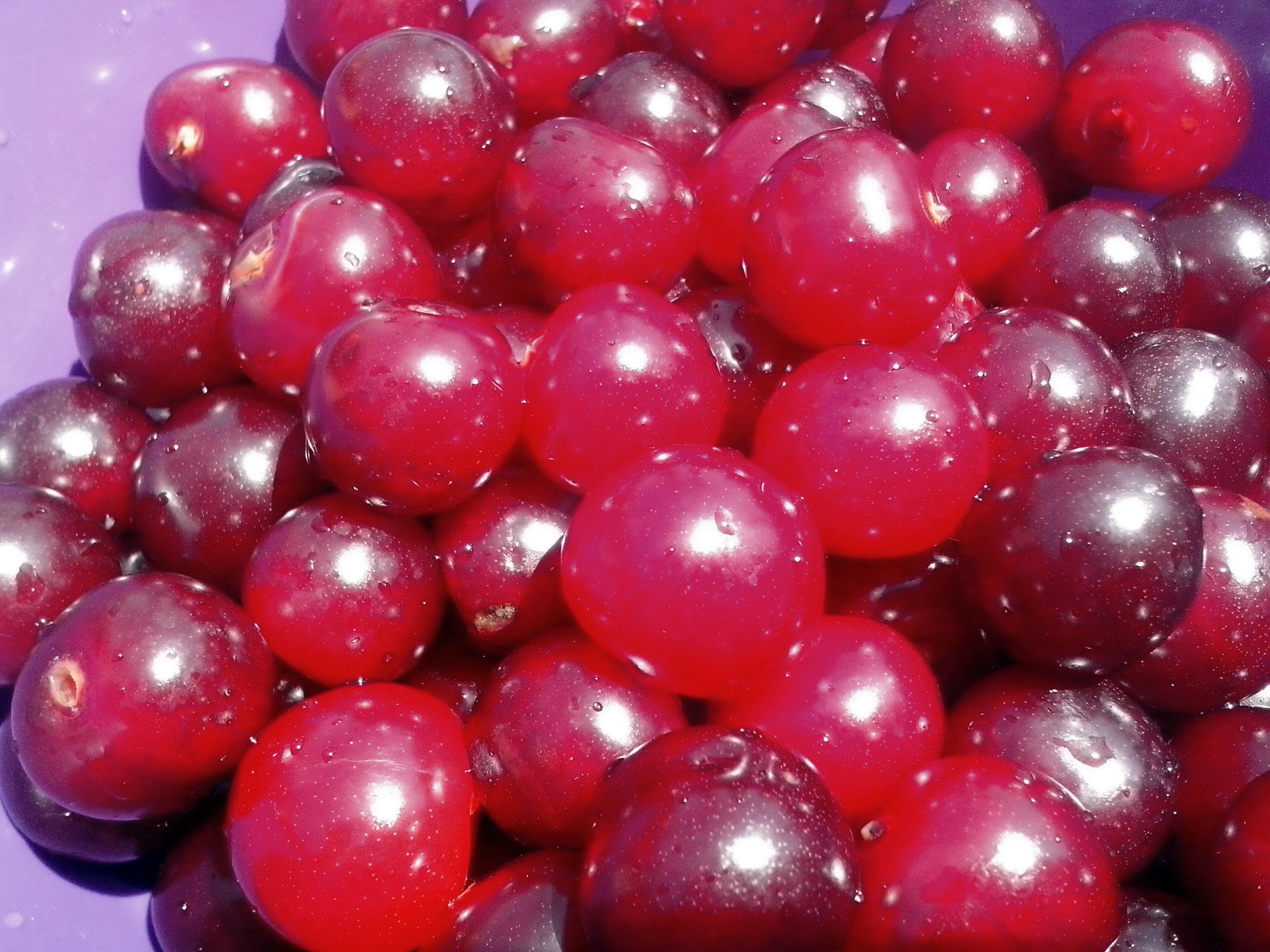 Free photograph; ripe, cherries, berries, fruit