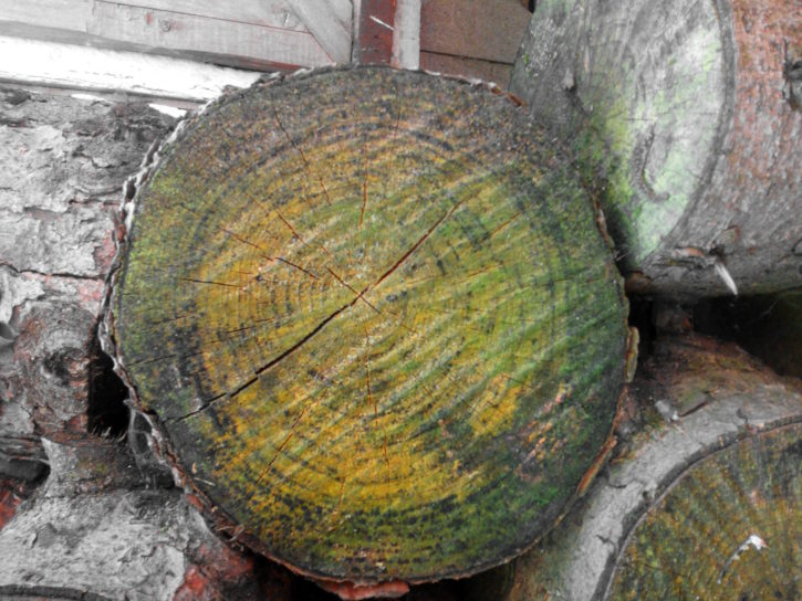 trunk, cross, sectional, wood, logs