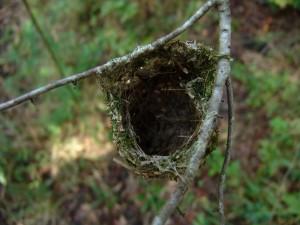 ramage, vireo, forêt, nid