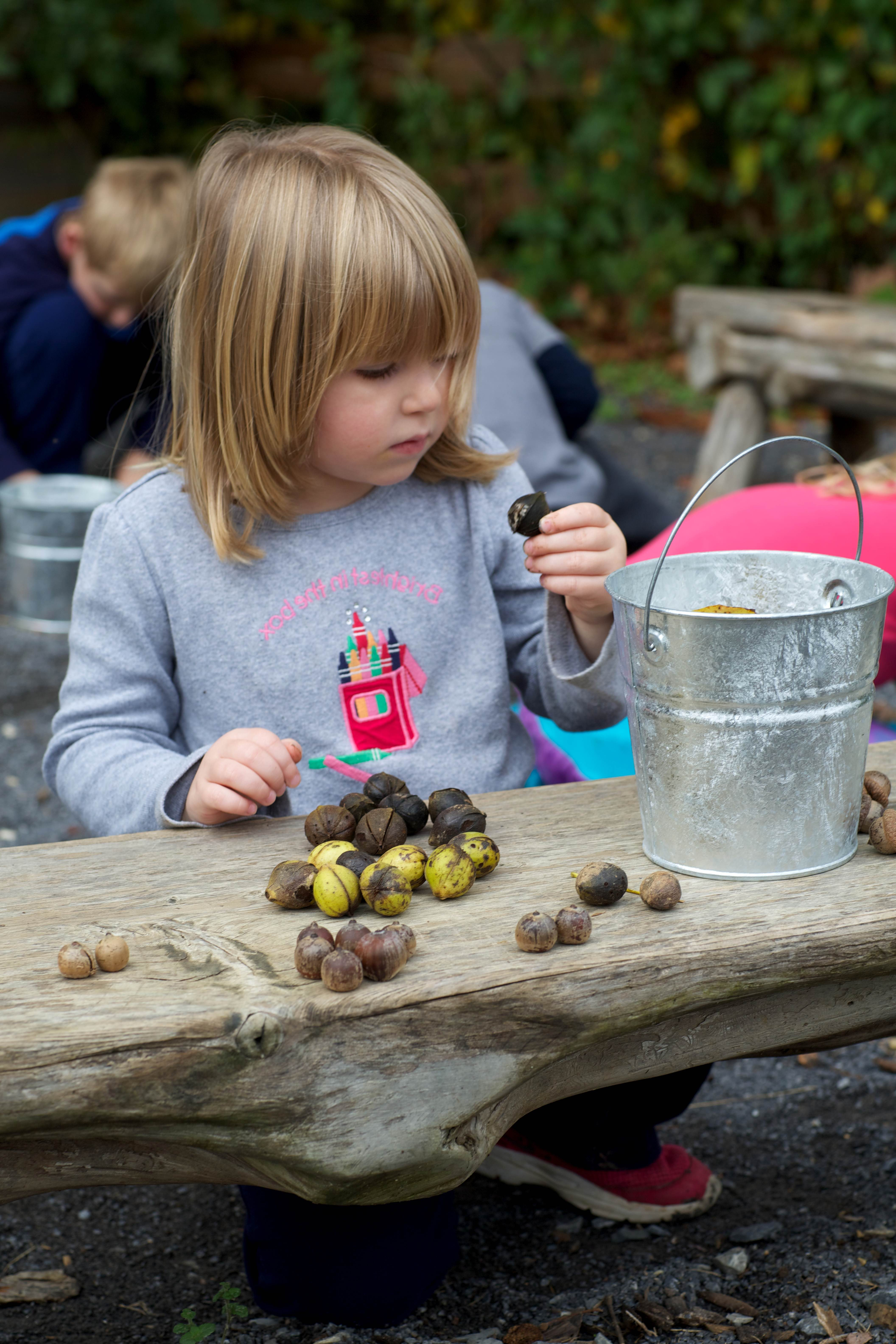 Free photograph; after, gathering, various, nuts, young, girl, examines, hickory, nut