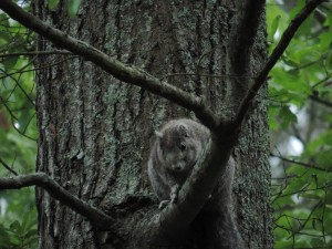 Tier, Fuchs, Eichhörnchen