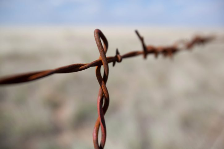 barbed, wire, macro