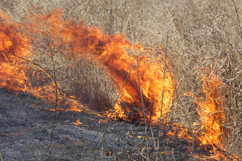 Free photograph; big, fire, burning, field, grass
