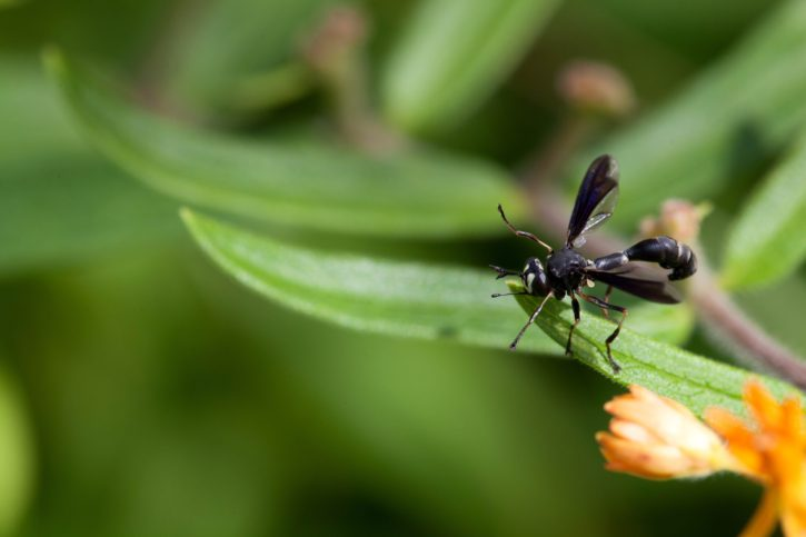 big, wing, Insect, butterfly, weed, plant