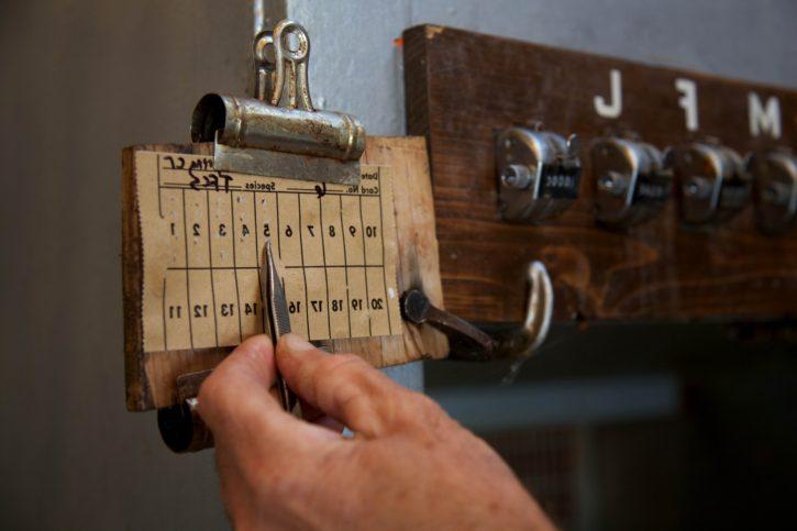 planche, bois, nombres, vieux, cru