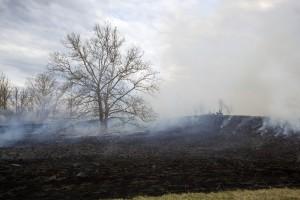 Burn, Tierwelt, Habitat