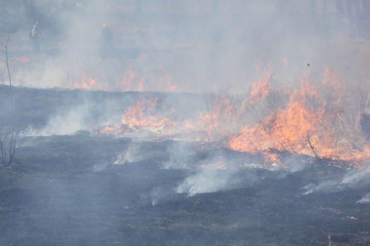 quemado, campos, naturaleza, humo, llama