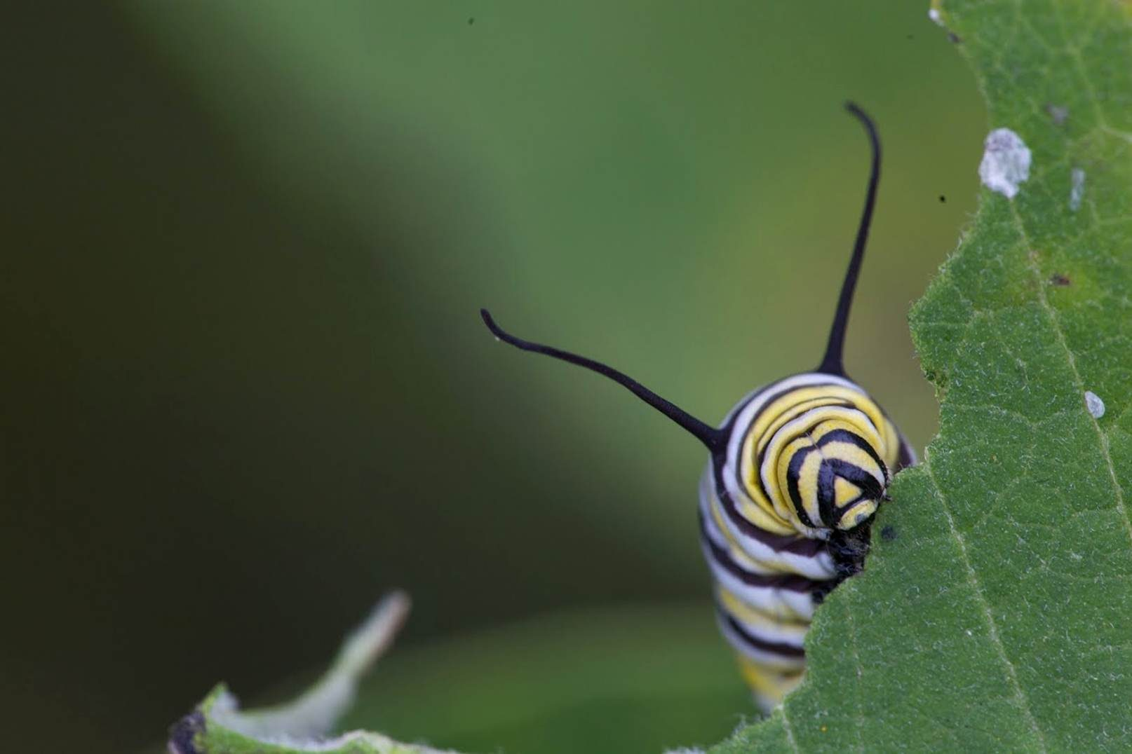 Free picture: caterpillar, head, insect, bug