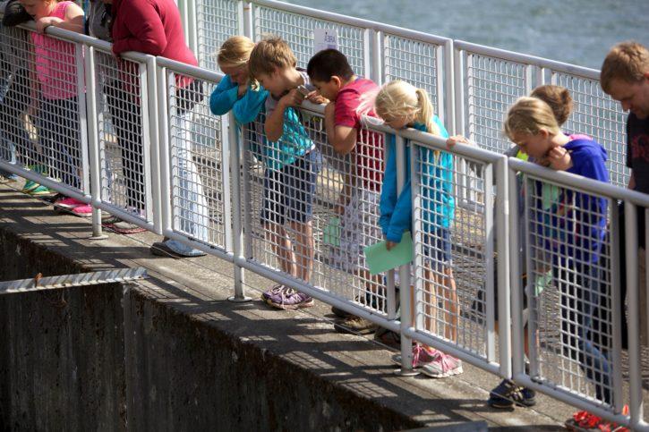 barn, læring, fisk, klekkeriet, fasiliteter