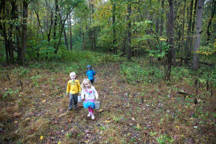 enfants, marche, forêt, loisirs