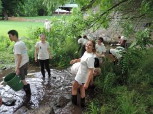 študent, dobrovoľníkov, odstránenie, exotické rastliny, mesto, spustiť