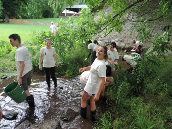 student, volunteers, removing, exotic, plants, town, run